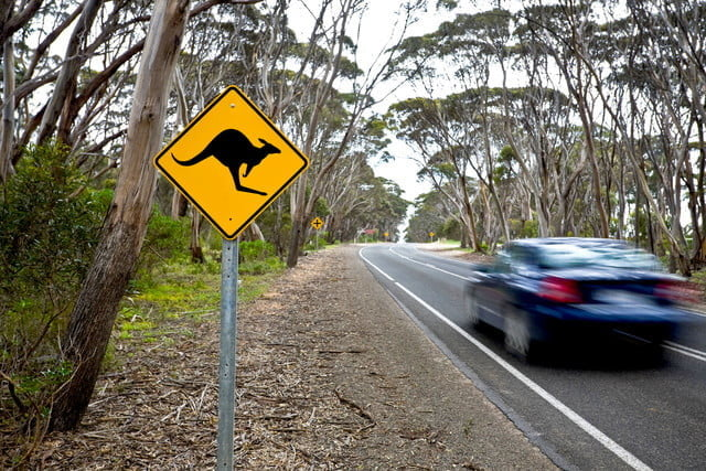 top tech stories 06 30 2017 49585964 kangaroo sign on a road in island australia 640x0