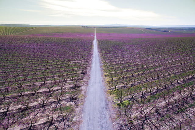 best drone photos aerial picture taken with of a beautiful long straight road between the blooming trees during spring time i