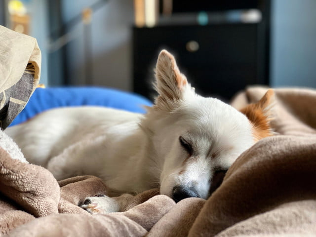 iphone 11 pro max review portrait mode dog bed