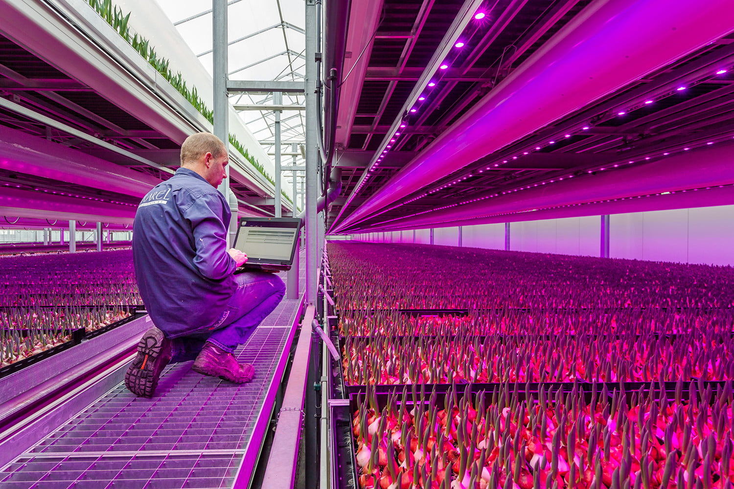 Will vertical farming continue to grow, or has it hit the