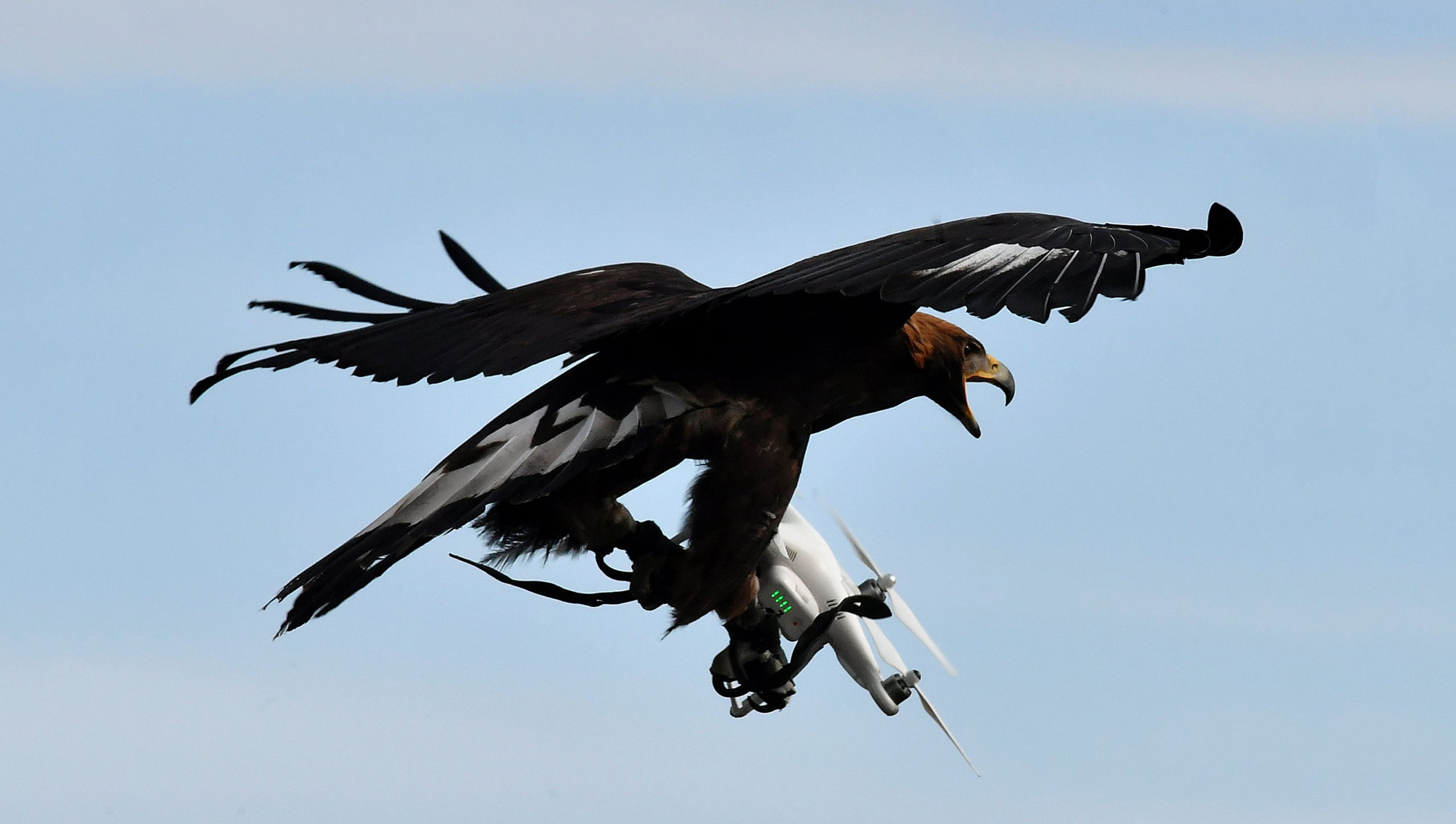 Death from above? How we're preparing for a future filled with weaponized drones