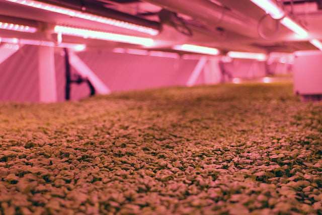 londons underground farm zero carbon food growing growth